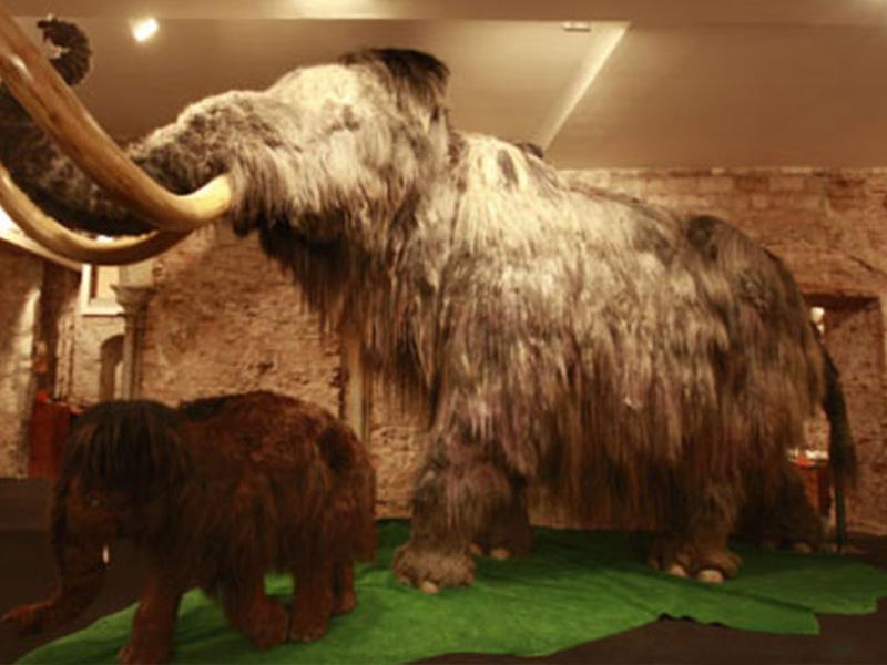 mammoth_museum2