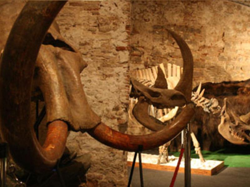 mammoth_museum3
